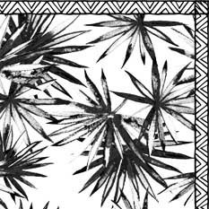 Tasmanie Noir & Blanc